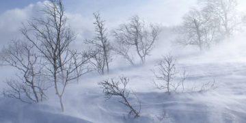 Маргаашнаас цас орж, хүйтэрнэ