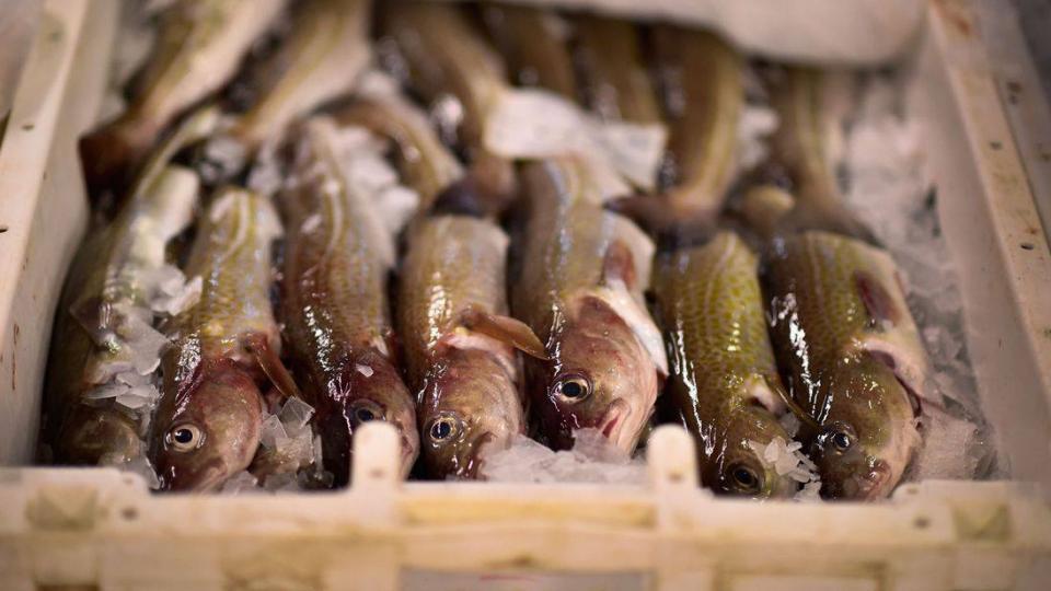 Ази, Номхон далайн бүс нутгийн загас устаж үгүй болох нь