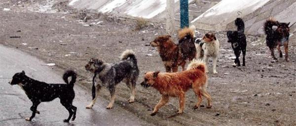 Таван тэрбумаар нохой устгана гэдэг нь ташаа мэдээлэл гэв