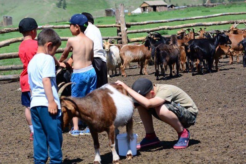 Монголд хүүхэд биш, ямаа болж төрсөн нь хамаагүй дээр болох нь ээ