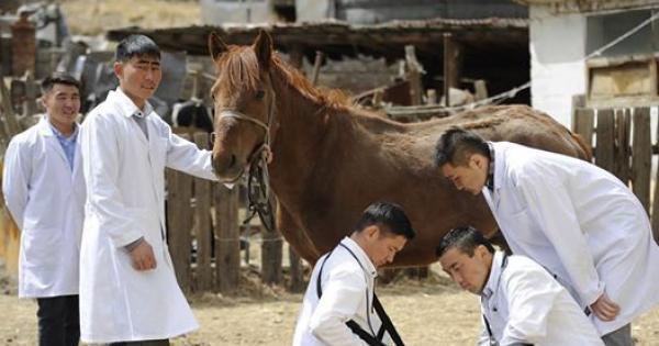 Монголын төр малынхаа эрүүл мэндийг хяналтандаа авах хууль баталлаа